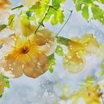 Τι ειναι τα ανθοϊαματα Μπαχ Bach Institute Hellas Bach Flower remedies
