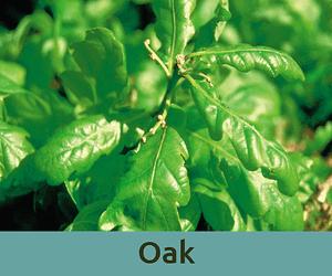 Oak για το καθηκον ανθοϊαμα Μπαχ Bach Institute Hellas